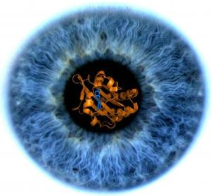 eye web