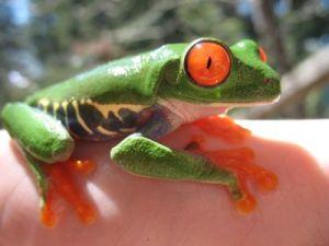 Frog and Eye
