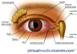 eye ducts