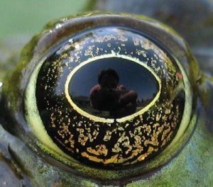 amphibian vision