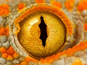 great reptile eye