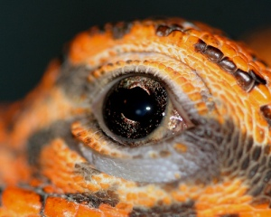 alien eye #51