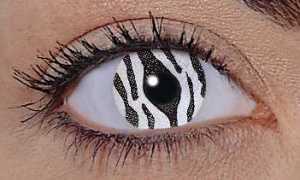 wild zebra eye