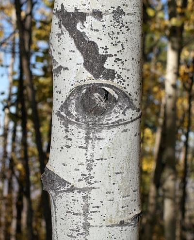 Aspen Eye
