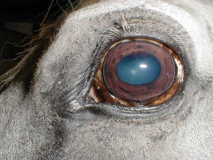 sick horse eye