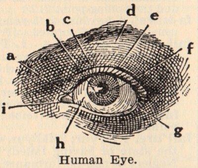 Eyes Anatomy Drawing Human Eye Anatomy Drawing