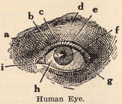 classic human eye anatomy drawing