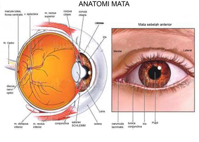 human eye anatomy #4
