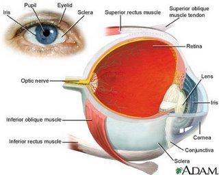 Human eye anatomy description the eye sight human eye anatomy ccuart Gallery