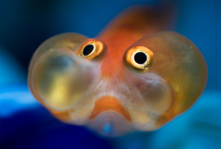 little orange fish eyes