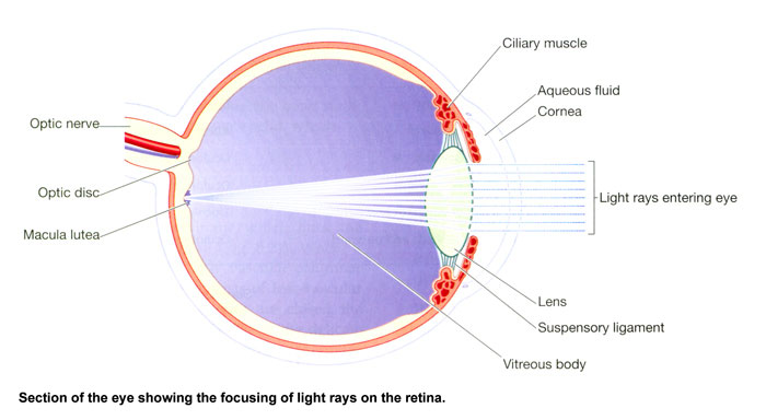 light entering the eye